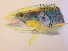 SALE Colored Pencil Brown Trout Limited Edition by Passionfortrout