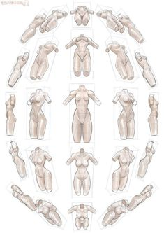female body: different perspectives