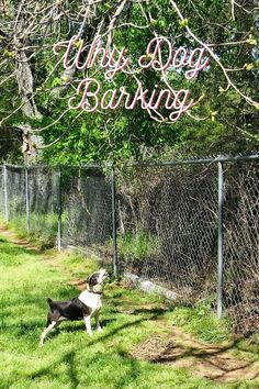 So Many Tricks To Teach On Dog Barking Stop Dog Barking, Dogs, Doggies, Dog