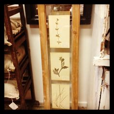 Antique French botanicals framed in antique English windows bleached pine finish