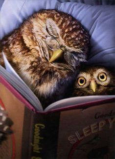 Owl tell you a bedtime story 🦉~Jolly Ollie 😊 Owl Bedding, Owl Pictures, Owl Always Love You, Wise Owl, Owl Art, Bedtime Stories, Funny Cards, I Love Books, Book Illustration