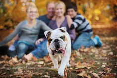 Lifestyle family photography. I love lifestyle photography and bulldogs! Win!