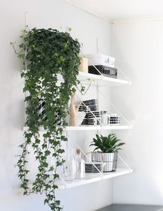 Plants on shelves, floors, and baskets