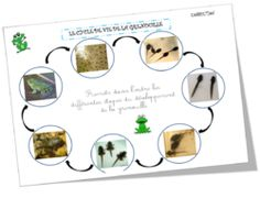 Du têtard à la grenouille Teaching French Immersion, Science Experience, Grade 3 Science, Learning Goals, French Class, Animal Projects, Homeschool, Education, Math