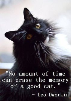 No amount of time can erase the memory of a good cat.