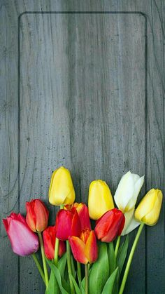 Lovely colorful tulips.
