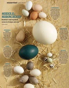 Humans eat a wide variety of eggs in our diets; generally, the smallest one in common use is the quail egg, while the ostrich egg is king of the nest at an average 3 lbs each!