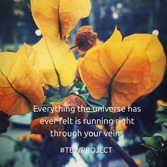 #Everything the #Universe has ever #Felt is #Running right through your #Veins #Flowers #lifequotes #life #BiggerPicture #Youarespecial #quoteoftheday #quotesdaily #quotes #quote #Yellow #TBWProject #TheBrokenWingProject Cosmic Quotes, You Are Special, Quote Of The Day, Life Quotes, Wings, Universe, Felt, Running, Photo And Video