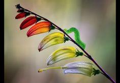 Kleurverloop. Door communitylid jimhoffman - NG FotoCommunity ©