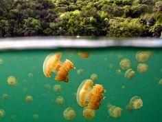 Bajo el mar   Disfrutar de tu tiempo libre es facilisimo.com