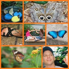Discover & explore butterflies for Cub Scouts and kids.  Links for lots of butterfly activities and PDF's.