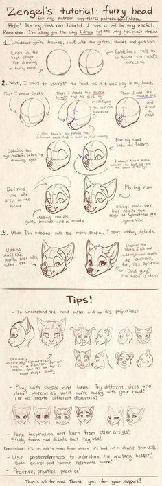 Zengel's tutorial - furry heads. by Zengel on DeviantArt