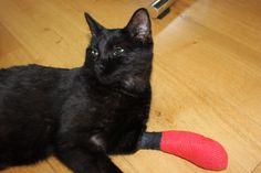 Katze Fuss gebrochen Cats, Animals, Gatos, Animales, Animaux, Animal, Cat, Animais, Kitty
