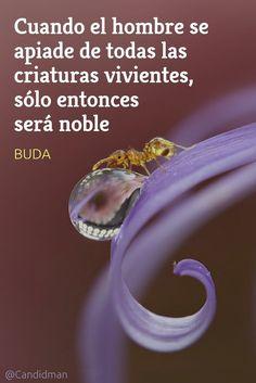 Cuando el hombre se apiade de todas las criaturas vivientes sólo entonces será noble. Buda @Candidman #Frases Frases Celebres Buda Candidman @candidman