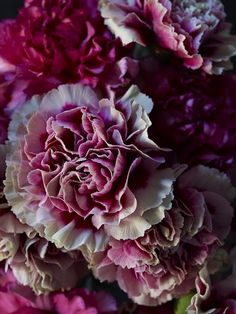 i usually think carnations are barfy but these are pretty