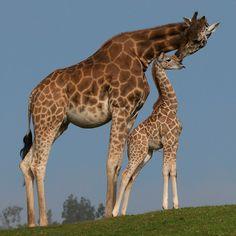 San Diego Zoo Safari Park, Escondido, CA    http://sdzsafaripark18.reachlocal.net/