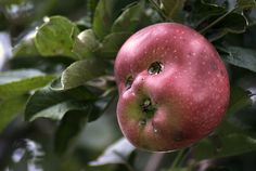 """""""Eat Me! It's cool..."""" said the apple, to Eve... The rest is history.  :)""""The Story"""""""