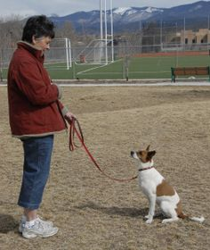 How to Teach a dog to Sit and Stay: Teaching A Dog On Garden ~ petsrank.com Dogs Inspiration