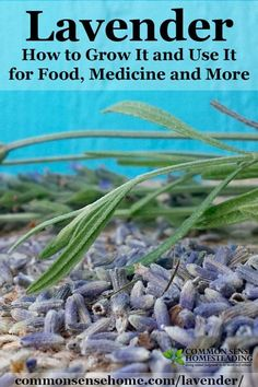 Lavender – How to Grow It and Use It for Food, Medicine and More