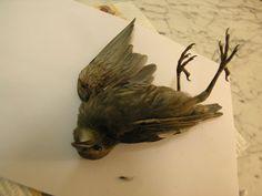 dead bird stock 37 by dark-dragon-stock on DeviantArt Arcadia Bay, Sculptures, Lion Sculpture, Tibetan Art, A Silent Voice, Lovely Creatures, Process Art, Memento Mori, Book Of Life