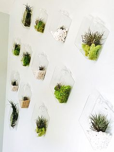 Set of 10 Rhombus Glass Wall Vase//Indoor Wall Planters//DIY Terrarium Design by Yourself and Decorate Your Wall of Dining-Room or Bedroom by NewDreamWorld on Etsy https://www.etsy.com/listing/387519302/set-of-10-rhombus-glass-wall-vaseindoor