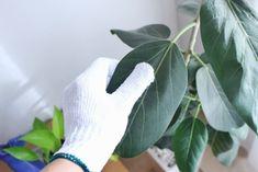常に出しっぱなしの観葉植物は結構汚れているってご存知でした? 特に葉の大きな植物はホコリが溜まり… Plant Leaves, Plants, Plant, Planets