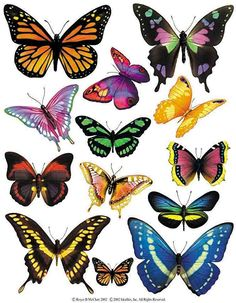 Enlarged view of a sheet of butterfly accent stickers from IdeaStix. Great selection, and I can imagine some fun uses for this. Butterfly Drawing, Butterfly Painting, Butterfly Wallpaper, Butterfly Artwork, Butterfly Decorations, Vintage Butterfly, Butterfly Images, Butterfly Pictures To Color, Beautiful Butterflies