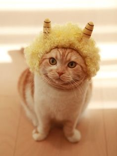 japanese demon cat