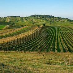 7 faktorov jedinečnosti vín z Budgenlandu – Kral Steffanus