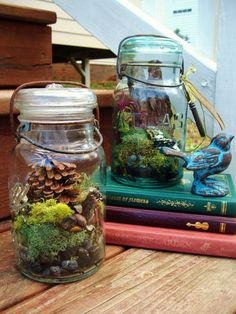 Moss Terrarium in a Large Antique Glass Mason Jar  by TheFreeFolk, $35.00