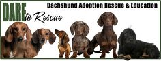 DARE a rescue in Florida is highlighting their seniors looking for great homes