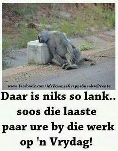 Vrydag Witty Quotes Humor, Cute Quotes, Funny Quotes, Qoutes, Good Morning Good Night, Good Morning Quotes, Fancy Words, Cool Words, Afrikaanse Quotes