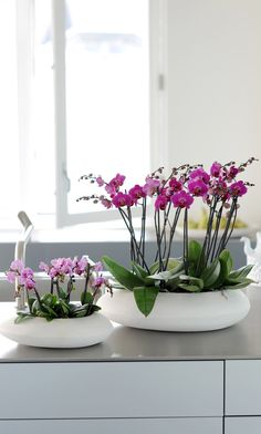 Small or big: within the 25.000 species everyone has an orchid to match!