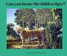 The Hidden Tiger Puzzle… This optical illusion was created by American wildlife artist Rusty Rust. It shows a majestic Bengal Tiger standing in a bamboo forest. Your mission, should you choo… Hidden Images, Hidden Pictures, Funny Animal Memes, Funny Animals, Artist Canvas, Canvas Art, Whatsapp Fun, Memes Of The Day, Optical Illusions