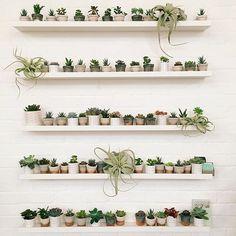 succulent gallery