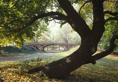 File:Central Park New York City New York 23 cropped.jpg