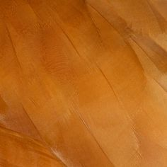 23 close up pictures of the skin of exotic animals: Ruddy Shelduck skin