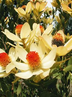 Flowers According to Seasonal Availability