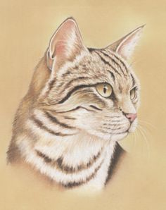 Learn to Paint a Simple Background using Pastel Pencils