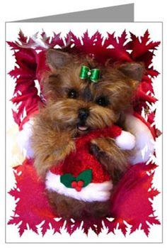 Happy Holidays...Yorkie style