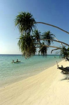 Derawan island. East kalimantan - Indonesia