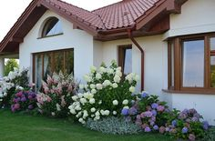 landscaping with hydrangea - Flower Garden İdeas İn Front Of House Hydrangea Landscaping, Privacy Landscaping, Home Landscaping, Front Yard Landscaping, White Hydrangea Garden, Lavender Garden, Purple Hydrangeas, Limelight Hydrangea, House Landscape