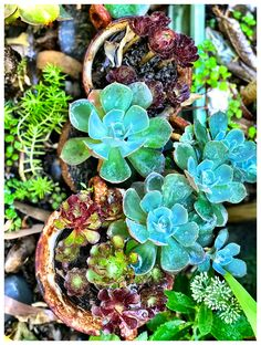 Simply a selection of scintillating succulents successfully sprayed in the summertime. Woodland Forest, Natural World, Make You Smile, Summer Time, The Selection, Succulents, Make It Yourself, Garden, Nature