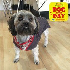Millie Dog Friends, Dog Days, Dogs, Animals, Animaux, Doggies, Animal, Animales, Pet Dogs