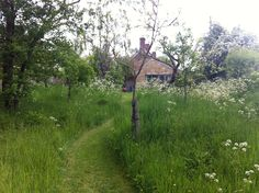 Mow a path through long grass, make your 'lawn' pretty and bee friendly-behind the house on the knoll