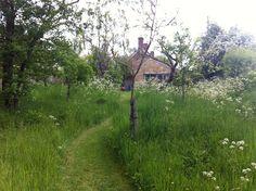 """Slå gresset i en sti gjennom langt gress. Gjør """"plenen"""" full av markblomster - og bie/humlevennlig."""