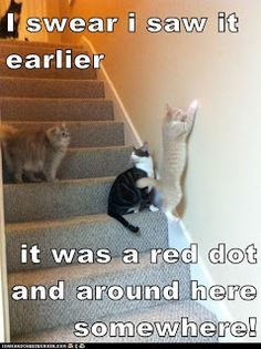 Barks and Blooms: Two Cats + One Pug = Funny Friday!!