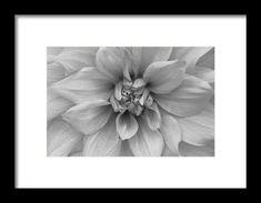 dahlia, macro, flower, nature, black and white, michiale schneider photography, interior design, framed art, wall art