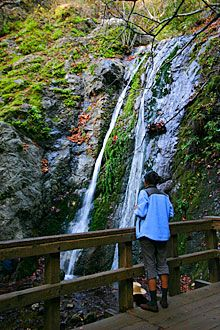 Pfeiffer Falls Trail - HIke through the redwoods and see a 60ft Waterfall, located in Pfeiffer Big Sur State Park