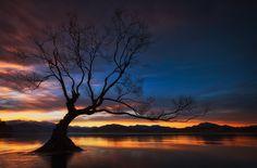 The Black Widow. - Lake Wanaka Tree.  Darren J.